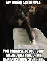 Silly Cat Memes - funniest cat memes uk cat breeders