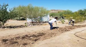 programs natural resources native plant communities new mexico native seeds search home