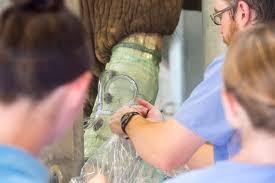 lexus repair specialist birmingham uab engineers develop new method to repair elephant tusks