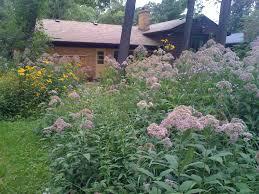 bird friendly native plants audubon migratory bird habitat and landscaping audubon great lakes