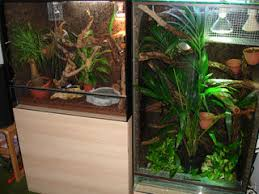 terrarium plants best hardy houseplants for reptile and amphibian