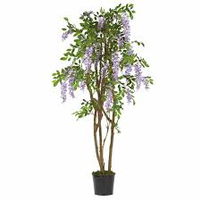 5 foot wisteria tree potted 5015 pp