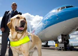 How Does A Guide Dog Help A Blind Person Travel By Air With An Assistance Dog Guide Dogs