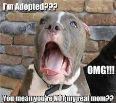 boxer dog jokes dog joke of the day daily dog breeds