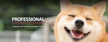 dog teeth cleaning arizona dog teeth cleaning arizona dog teeth