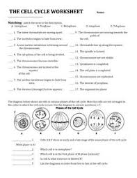 cell division mitosis and meiosis crossword puzzle mitosis
