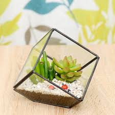 succulent glass cube terrarium kit by dingading terrariums