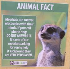 La Zoo Lights Coupon by Fake Animal Facts Were Posted At The La Zoo U2026 And They U0027re Hilarious