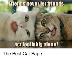 The Best Cat Memes - friends never let friends act foolishly alone the best cat page