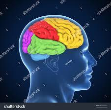 3d Head Anatomy Human Brain 3d Illustration Stock Illustration 140383462