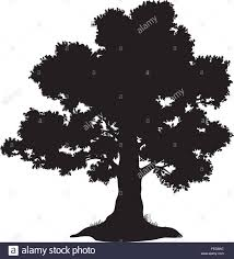 White Oak Tree Drawing Drawing Oak Leaf Tree Stock Photos U0026 Drawing Oak Leaf Tree Stock