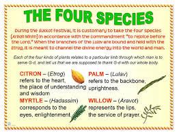 prayers for sukkot four species poster jecc marketplace