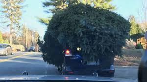massachusetts police stop mazda with massive christmas tree on its