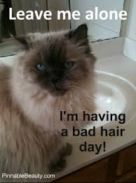 Having A Bad Day Meme - bad hair day cat meme pinnable beauty