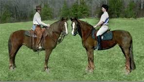 Western Photo Album Photo Album Eastwest Morgans Breeding And Training Of Western
