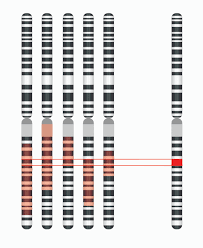 Dna Mapping File Disease Gene Mapping With Multiple Chromosomes Jpg