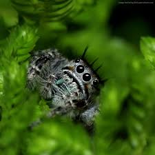 green halloween background wallpaper jumping spider eyes insects leaves green nature
