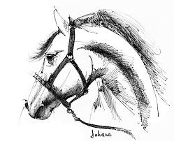 horse face ink sketch drawing drawing by daliana pacuraru