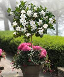 Climbing Plant With Fragrant Flowers Best Patio Flowers From Brick Patio Pillar Flowers Steps Covered