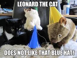 Grumpy Cat Birthday Memes - leonard revisits grumpy cat s birthday world of leonard