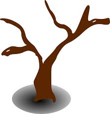 tree dead dry lifeless drought png image pictures picpng