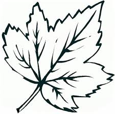maple leaf coloring page for coloring page itgod me