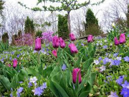 bulbs i u0027m planting for spring color and perfume
