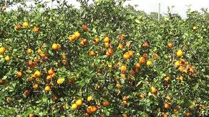 Map Of Plantation Florida by Orange Grove In Florida Real Usa Ep 28 Youtube