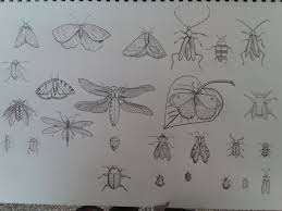 insect sketches bronaghmccauley