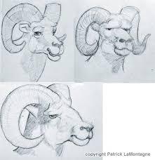 bighorn sheep sketches cartoon ink