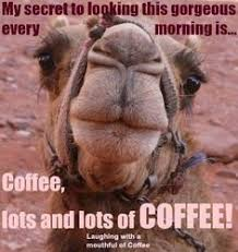 Hump Day Camel Meme - hump day camel meme quotes quote days of the week wednesday hump day
