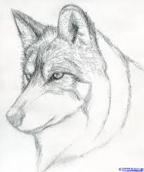 learn how to draw a wolf head mexican wolf forest animals