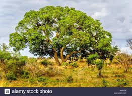 Seeking Limpopo Limpopo Region Stock Photos Limpopo Region Stock Images Alamy