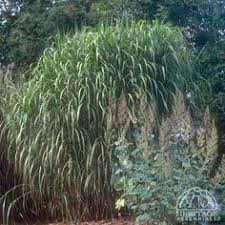 the best ways to get rid of ornamental grasses grasses gardens