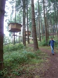 Coolest Treehouses Download Best House Trees Solidaria Garden