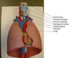 Google Human Anatomy 101 Best Human Anatomy U0026 Physiology Images On Pinterest Nursing