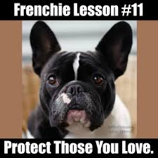 French Bulldog Meme - frenchie lessons battle of the bulldogs
