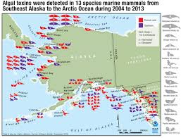 Southeast Alaska Map by Testing Detects Algal Toxins In Alaska Marine Mammals Northwest