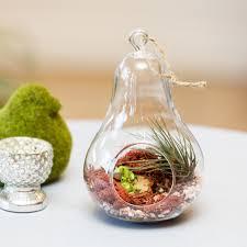 blown glass terrarium containers pear terrarium home pictures 3773