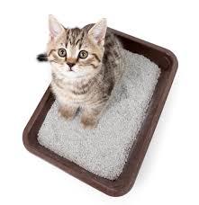 Decorative Cat Box Litter Box Large Covered Designer Cat Litter Box Furniture