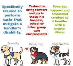 Comfort Dogs Certification Pet Clipart Therapy Dog Pencil And In Color Pet Clipart Therapy Dog