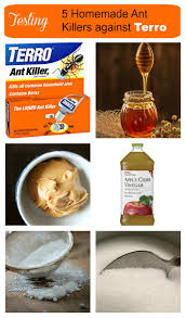 borax ant killers testing 5 different natural ant killers