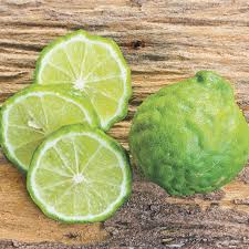 kieffer lime tree from jackson perkins