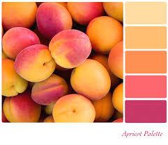 Warm Orange Color Orange Color Palette Varying Shade Of Orange It Depends On The