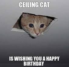 Grumpy Cat Meme Happy Birthday - grumpy cat clipart happy birthday pencil and in color grumpy cat