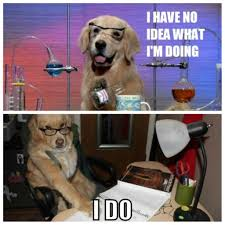 Advice Dog Memes - financial advice dog knows