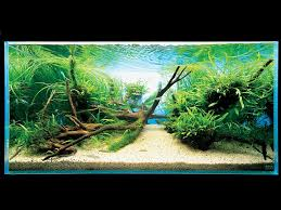 Takashi Amano Aquascaping Techniques Aquatic Design By The Amazing Takashi Amano Ode To Takashi Amano