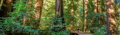 muir woods national monument u s national park service