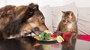 alimentazione casalinga gatto alimentazione per cani e gatti quello non sapevi