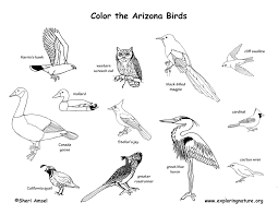 Arizona birds images Arizona habitats mammals birds amphibians reptiles jpg